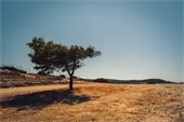Dry Grass Image