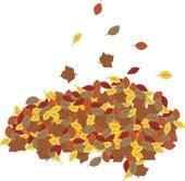 Leaf drop season is ending