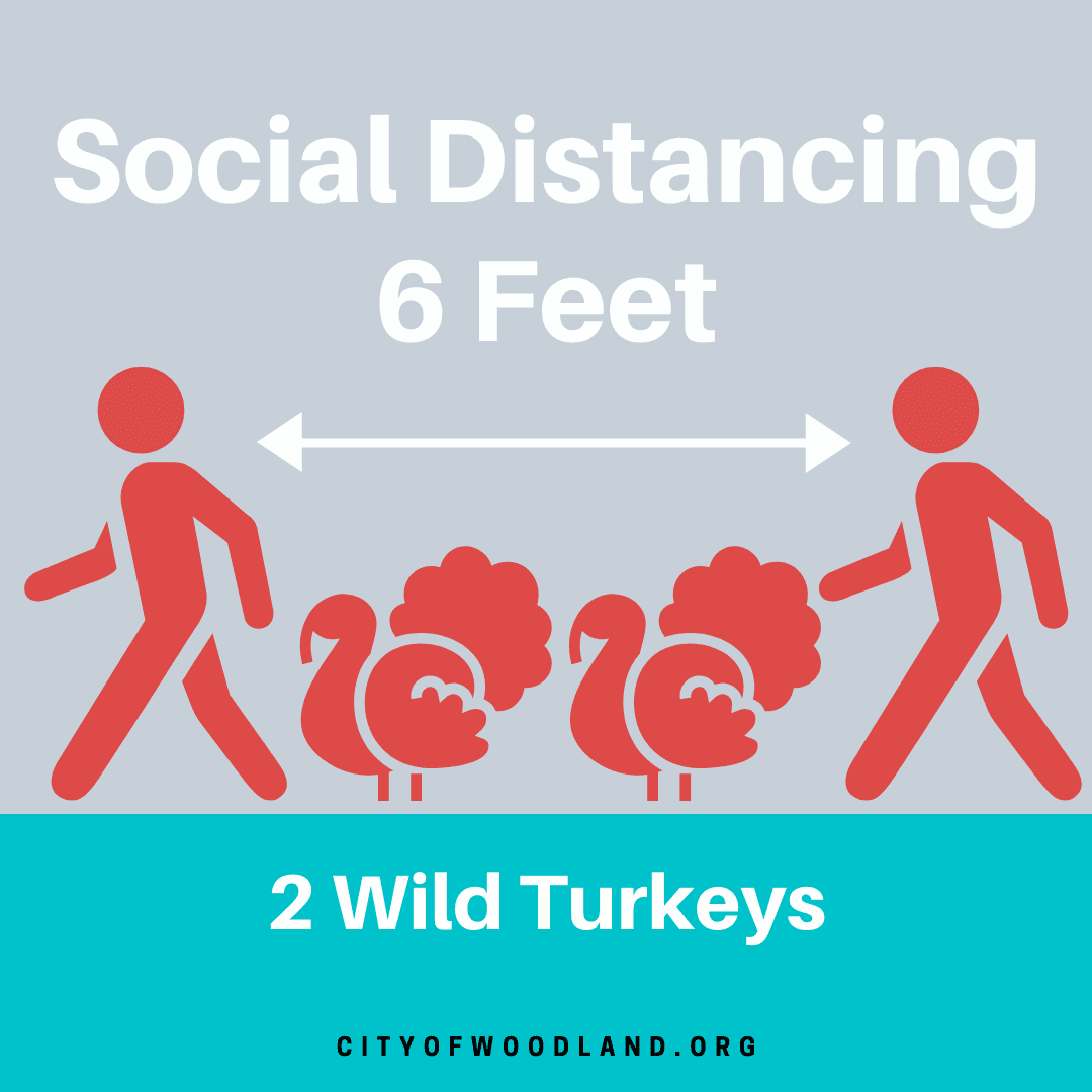 turkey social distancing